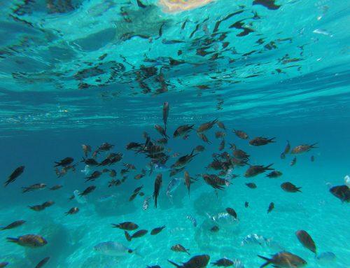 Mini-guida Lampedusa: spiagge, fondali, tramonti… NATURA