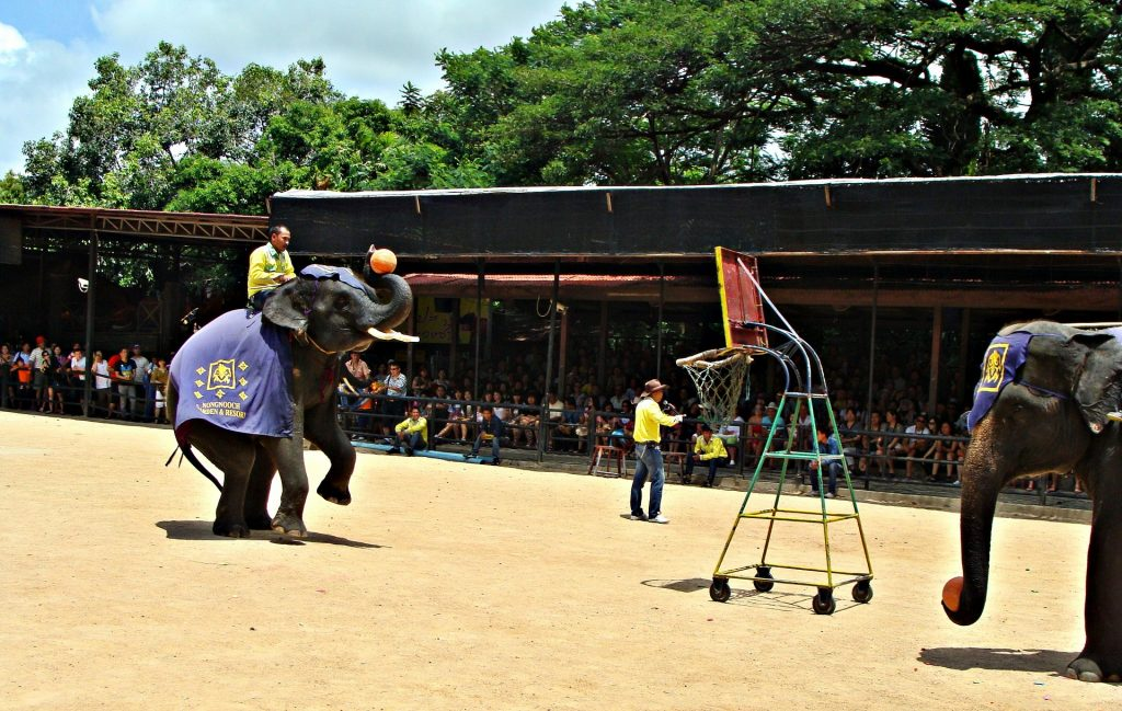 cavalcare gli elefanti